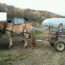 Maeve on Horse-Drawn Plow