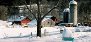 Winter Scene from Bee Hives
